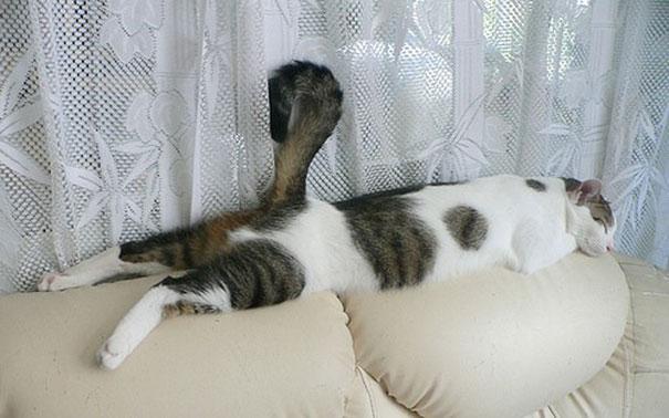 30 chats qui dorment n 39 importe o et n 39 importe comment. Black Bedroom Furniture Sets. Home Design Ideas